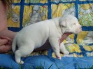 Everybodys Darling 22 Days Old